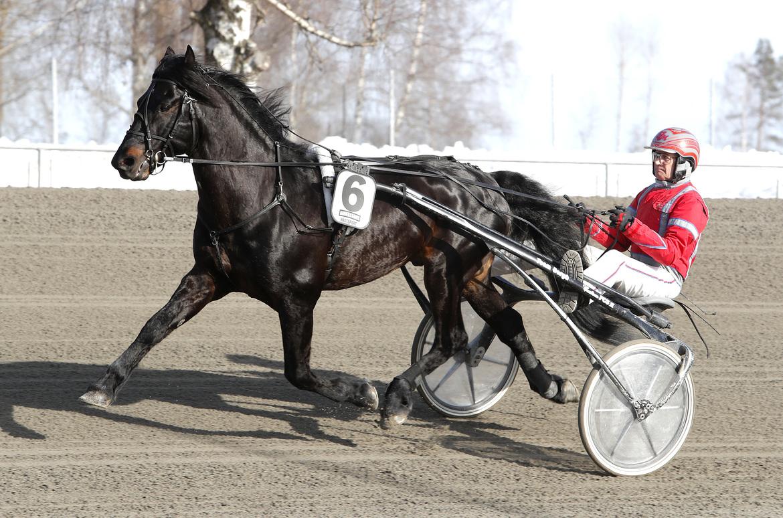 Månprinsen A.M. tog sin nionde raka seger när han på fredagen årsdebuterade i Bollnäs. Micke Gustafsson/TR Bild.