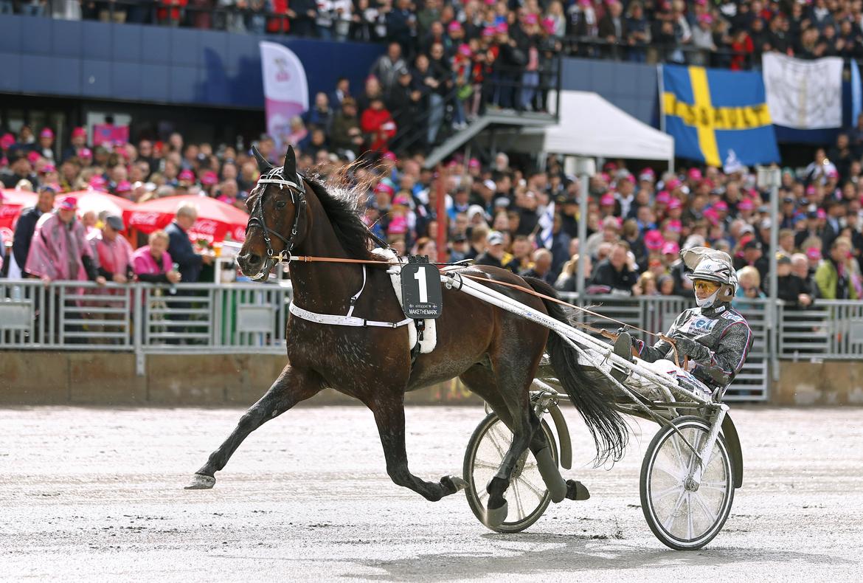 Makethemark blev trea i Elitloppet förra året. Maria Holmén TR Bild.