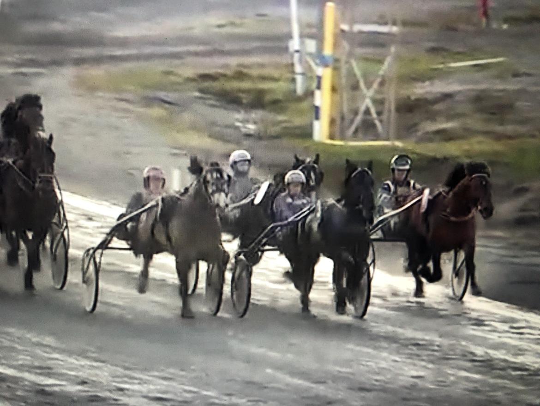 Smedheim Solan har kopplat grepp i Nordgubbens Minne på tisdagkvällen och vinner före Björs Frej och Järvsöodin. Favoriten Tangen Haap trött på innerspåret.