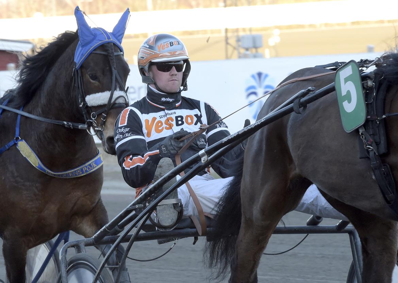 Gävletränaren Oskar Kylin Blom på väg mot en spännande final i Svenskt Kallblodskriterium med Bäcklös Faron.