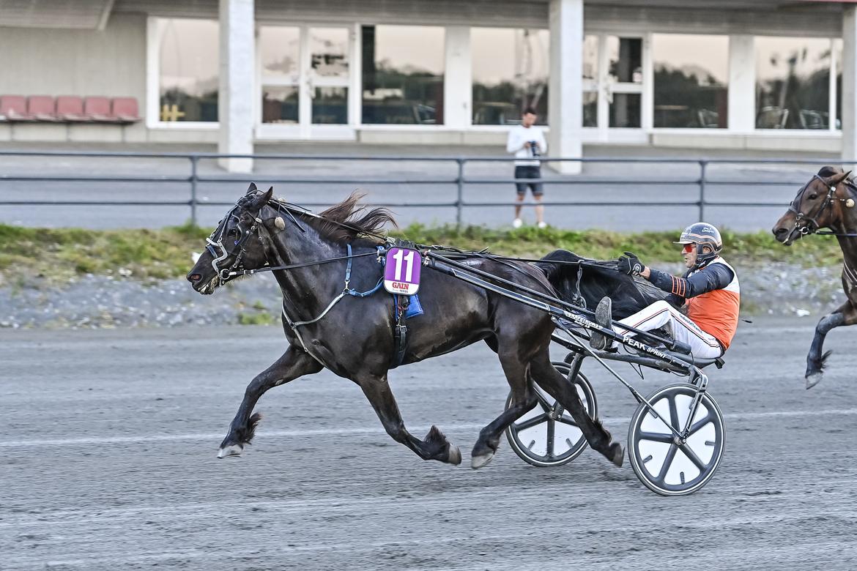 Alfie toppspurtar till seger i Norrländska Elitstoet på Umåker för Ove A Lindqvist.