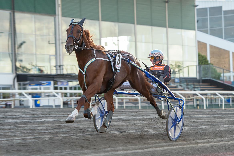 Tomas Malmqvist-tränade Empire jagar en finalplats i det danska travderbyt. Mikael Rosenquist TR Bild.