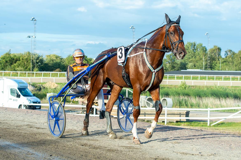 Empire och Ken Ecce blir stora favoriter i det danska derbyt. Tomas Malmqvist på Jägersro tränar. Arkivbild.