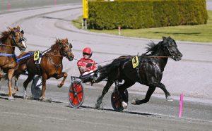 Odd Herakles kliver undan till seger i Elitkampen på Solvalla nu i maj med Tom Erik Solberg i vagnen.
