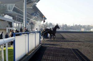 Häst kliver ut på Vincennes svarta bana.