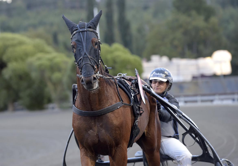 Trumpie är yngst i klass II-finalen med sina tre år. Lars Jakobsson TR Bild.
