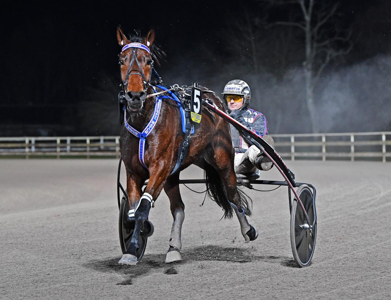 Ulf Ohlsson har segerdefilerat 318 gånger i år. Malin Albinsson TR Bild.