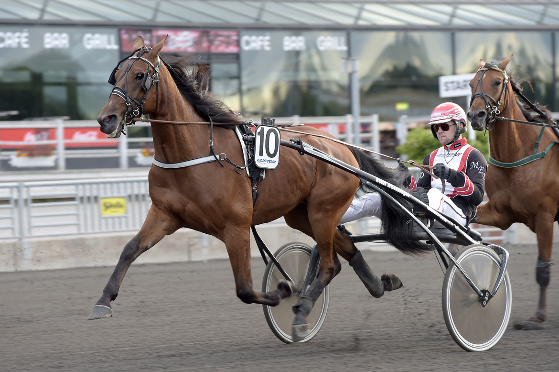 Bone Hard Flash (V75-3) som kommer från en övertygande triumf på Örebro. Lars Jakobsson TR Bild.