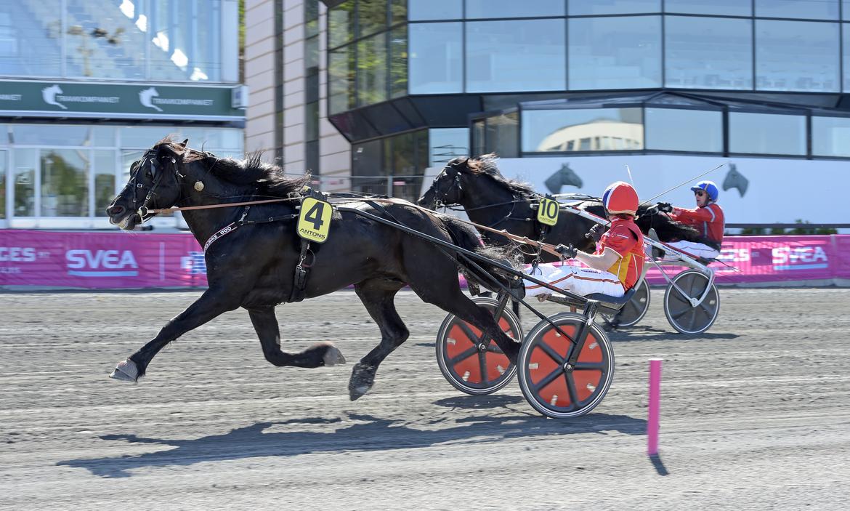 Odd Herakles vinner Elitkampen på Solvalla förra året tillsammans med Tom Erik Solberg. Månprinsen A.M. spurtar till andraplatsen.