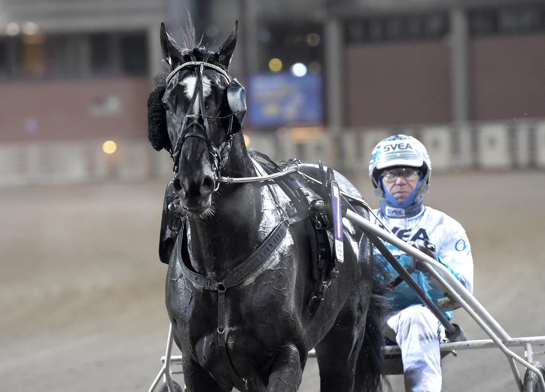 Brambling är skadad och missar Konungens Pokal. Lars Jakobsson/TR Bild.