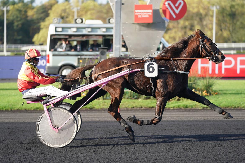 Franske Gelati Cut 13e häst klar för Elitloppet. Gerard Forni (Solvalla pressrelease).